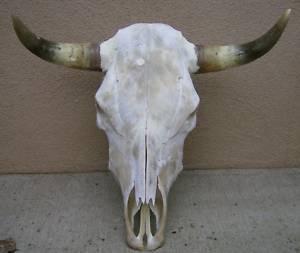 Steerskull